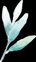 Heilpraktikerin Nina Husen-Lüthje - Logo Salbei